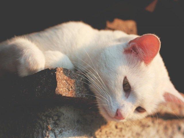 [FOTO] Unde merg pisicile cand pleaca de acasa: imaginile care te vor uimi