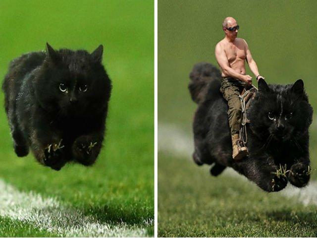 [FOTO] O pisica a intrat pe teren la un meci de rugby. Cum a reactionat internetul