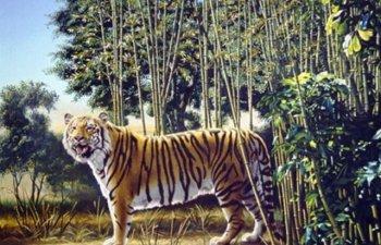 [FOTO] Testul pe care putini il trec. Cati tigri vezi in imagine?