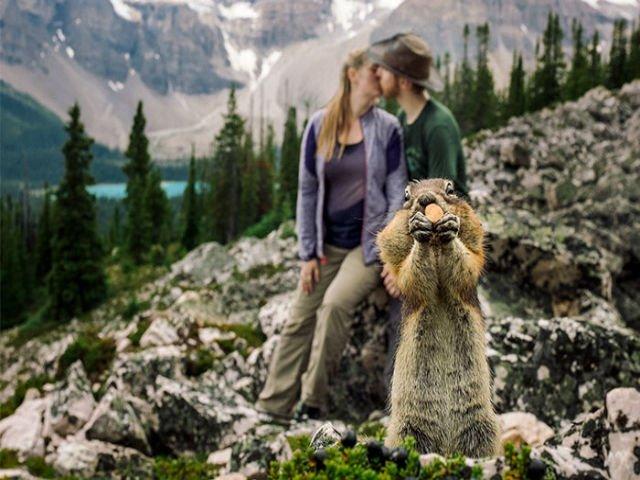 """[FOTO] O veverita a """"stricat"""" sedinta foto a unui cuplu logodit"""
