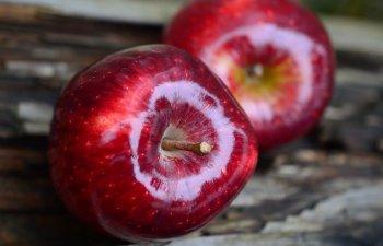 5 alimente banale care te pot ucide daca nu le consumi corect