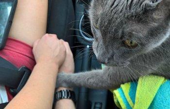 [FOTO] Modul emotionant in care o pisica si-a luat adio de la stapanii ei