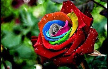 Cele mai rare 10 flori din lume