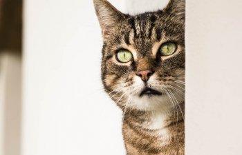 Curiozitati despre pisici. Tot ce NU STIAI despre cele mai iubite feline