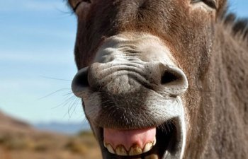 Cele mai amuzante 10 bancuri cu animale