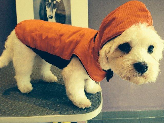 Adaptarea celor mai buni prieteni ai omului la frig: Ar trebui sa poarte cainii haine iarna?