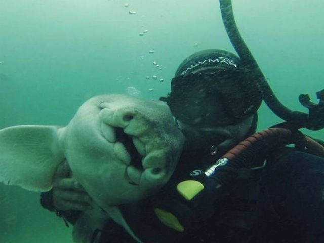 [FOTO] Un barbat s-a imprietenit cu un rechin si acum se joaca de fiecare data cand se revad