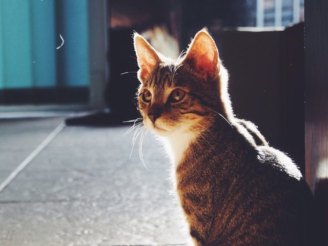 Pisica-erou. Cum a salvat o familie intreaga dintr-un incendiu