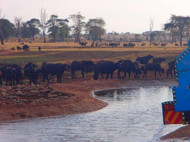 [FOTO] Conduce cateva ore in fiecare zi pentru a duce apa animalelor salbatice
