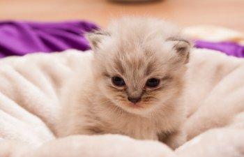 Tristetea nu se citeste doar pe chipul oamenilor! 10+2 fotografii care surprind suferinta pisicilor