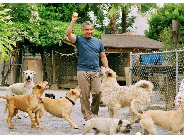 Cesar Millan, celebrul antrenor de caini, a ajuns in Romania