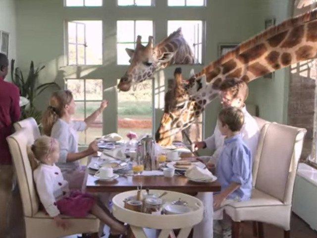 [Video] Hotelul in care oaspetii pot lua micul dejun cu... girafele