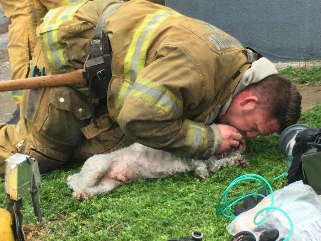 [VIDEO] Un pompier a salvat un caine, facandu-i respiratie gura la gura