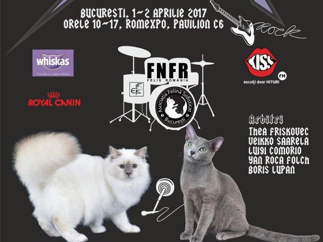 Expozitia Felina Internationala de Primavara SofistiCAT - SofistiCAT Rock