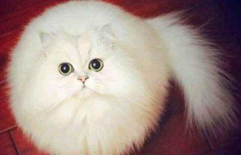 Cele mai pufoase animale de pe planeta. Sunt adorabile!