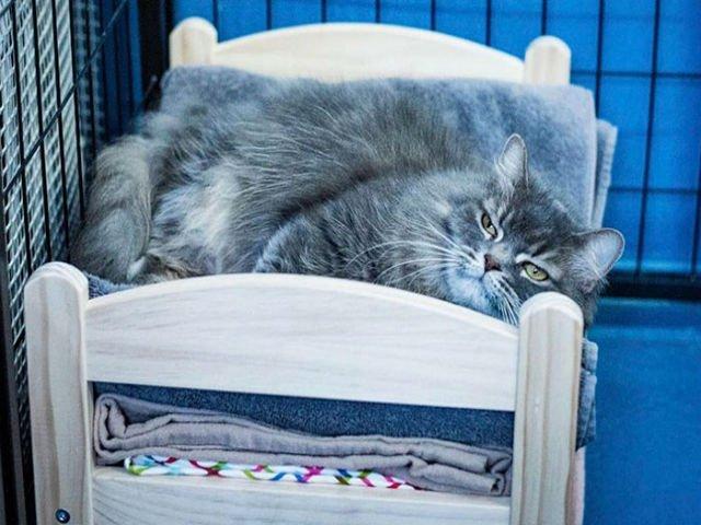 [VIDEO] Ikea a donat paturi de papusi unui adapost pentru pisici. Cum au reactionat