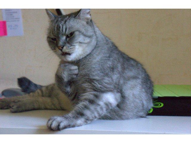 10 imagini cu pisici care ar merita un Oscar pentru reactiile lor
