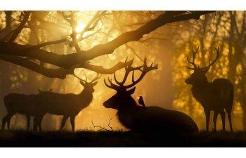 10 imagini splendide care nu au suferit nicio modificare