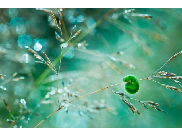 Lumea de basm a insectelor, in fotografii fantastice
