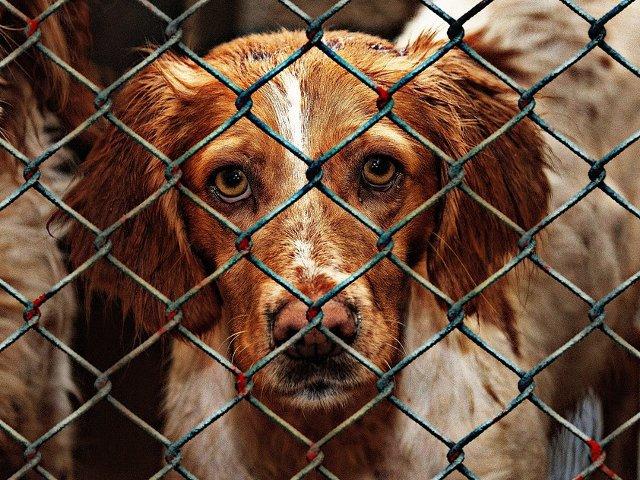 Dragnea vrea legi mai aspre pentru pedepsirea celor care maltrateaza animalele