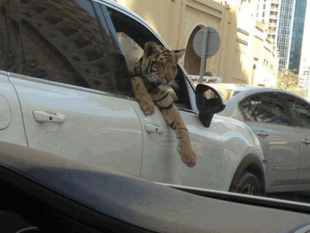 10 lucruri pe care nu le poti vedea decat in Dubai