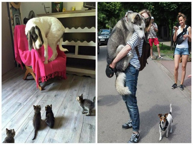Si cainii au fobii! 10 imagini amuzante cu cei mai fricosi catei din lume