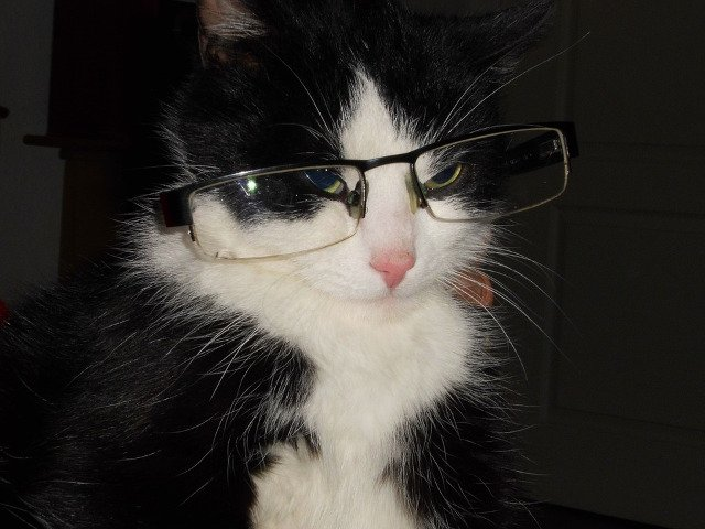 Top 10 cele mai amuzante fotografii cu pisici din toate timpurile