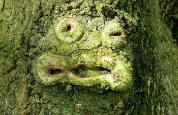 Top 10 cele mai ciudate lucruri intalnite in natura