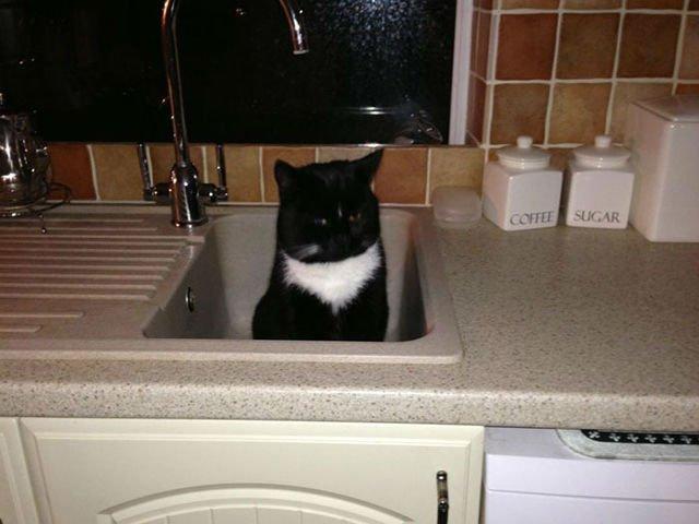 """""""Aceasta nu este pisica mea."""" Cele mai simpatice feline care au luat in stapanire casele vecinilor"""