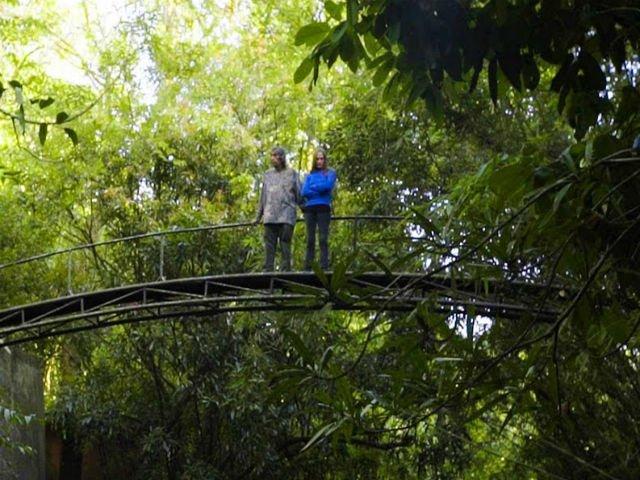 [VIDEO] Un cuplu a petrecut ultimii 26 de ani plantand o padure tropicala. Cum arata azi