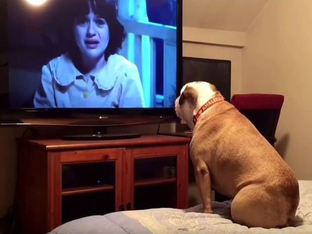 [VIDEO] Cum reactioneaza acest caine atunci cand se uita la un film horror