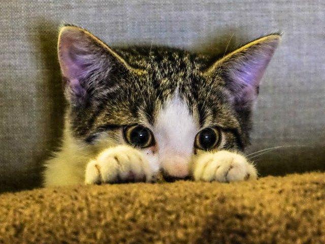 10 motive pentru care pisicile sunt cele mai bune animale de companie