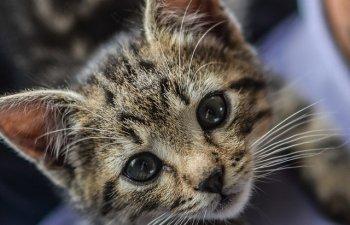 Top 10 pui de animale care iti vor insenina ziua