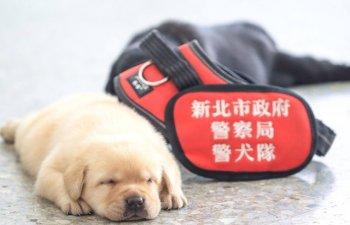 Imagini: Catelusii politiei din Taiwan au fascinat internetul