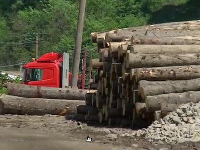 Bacau: Hoti de lemne sub comanda primarului