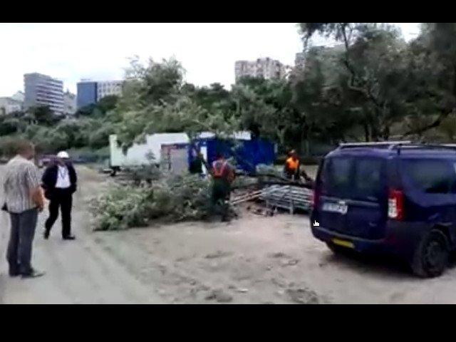 Copaci taiati pe plaja Modern din Constanta