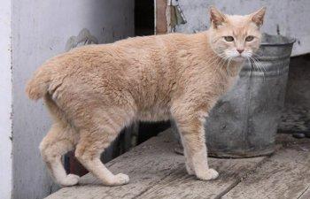 Pisica Stubbs, primar al unui orasel din Alaska de 20 de ani, a incetat din viata