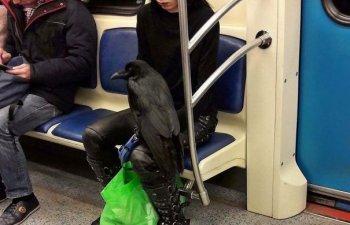 10+ imagini... ciudate facute calatorilor din metrou