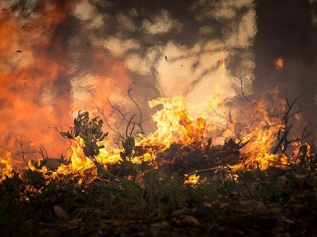 Incendii de vegetatie in Europa din pricina caniculei