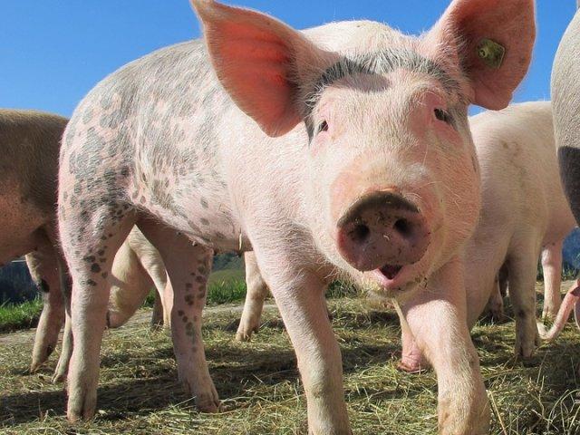 Administratorul fermei de porci Salcia a fiului lui Dragnea, eliberat din arest si pus sub control judiciar