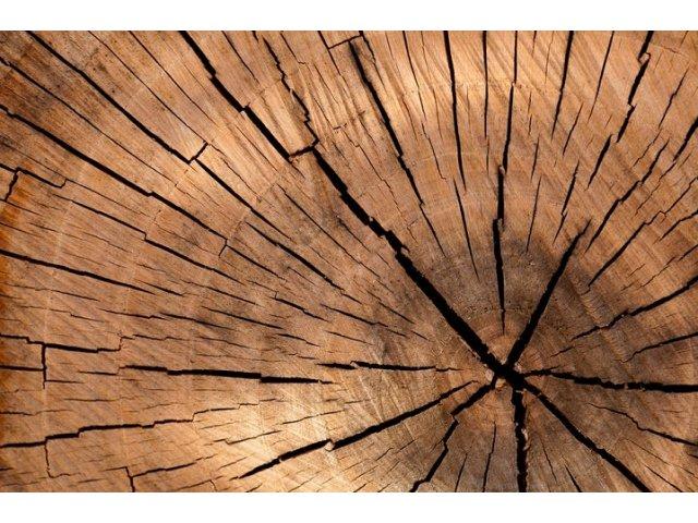 Primarul unei localitati din Cluj a fost retinut pentru taieri ilegale de arbori
