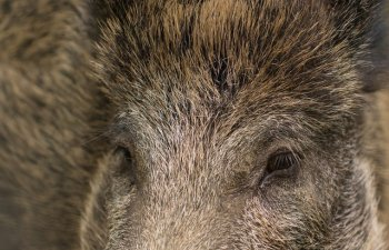 Venezuela: Mai multe animale, furate de la o gradina zoologica. Autoritatile cred ca hotii au vrut sa le manance
