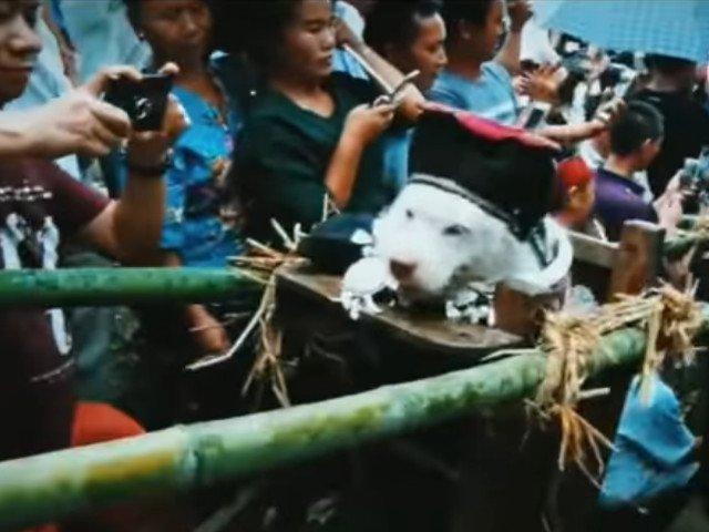 Ritual in China: Un caine este imbracat, asezat la loc de cinste si purtat pe umeri de tinerii din sat