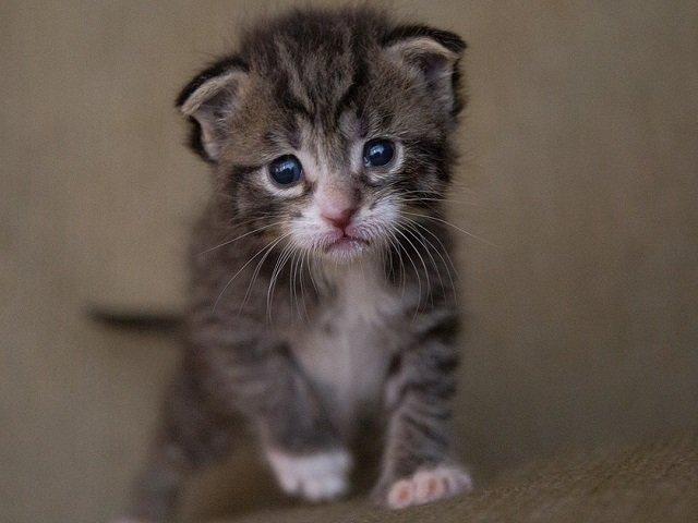 Top 10 fotografii cu pisici care topesc pana si cea mai rece inima