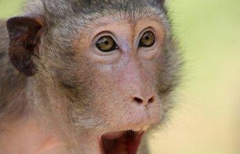 Chiar si animalele sunt luate prin surprindere! 10 fotografii care ilustreaza reactiile lor adorabile