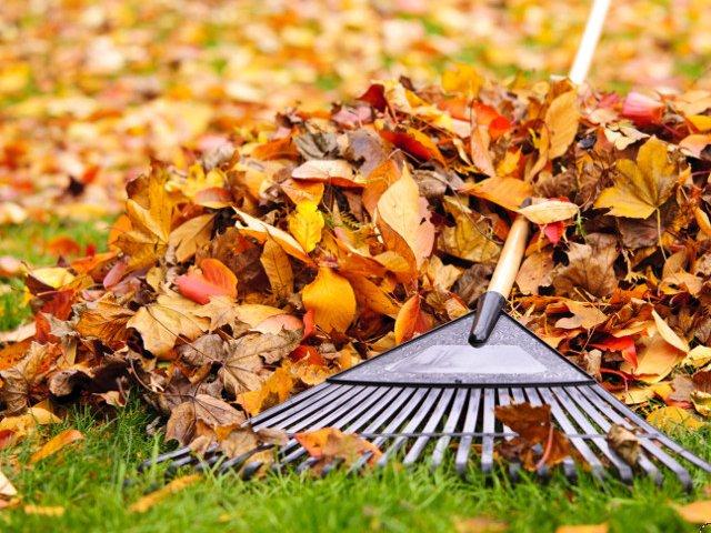 10 sfaturi utile in pregatirea curtii si gradinii pentru sezonul rece