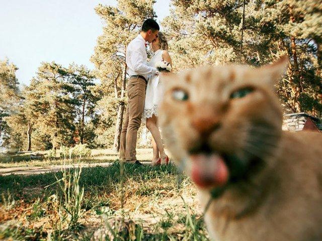 Invitati neasteptati: 10 poze de nunta care te vor face sa razi cu lacrimi