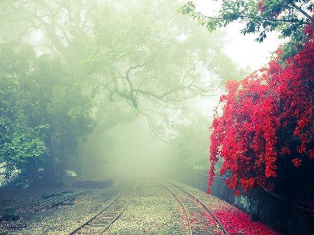 Vizibilitate redusa, izolat ploi slabe sau burnita. Meteorologii au emis cod GALBEN de ceata