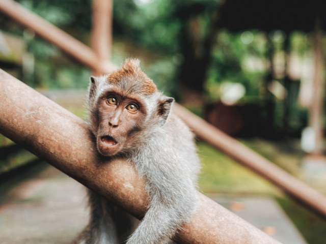 10+ intamplari BIZARE care au marcat anul 2017: de la cainele care a fost ales primar la maimuta care a lasat un oras fara curent electric