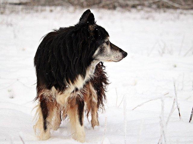 Un caine in varsta care se ratacise in urma unei ninsori abundente in Marea Britanie, gasit dupa 10 zile de cautari